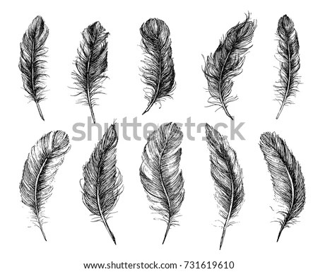 Feather Stock Images, Royalty-Free Images & Vectors