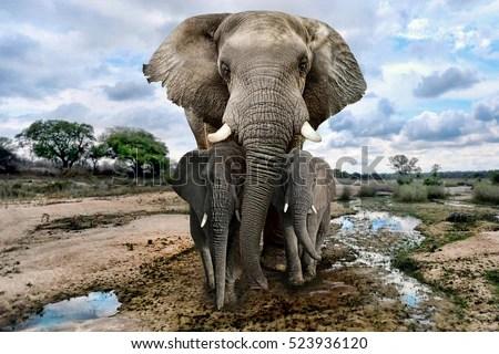 Cute Cartoon Elephant Wallpaper Elephant Stock Images Royalty Free Images Amp Vectors
