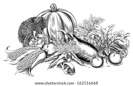 A vintage retro woodcut print or etching style vegetable