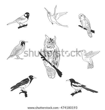 Set Wood Domestic Exotic Birds Flying Stock Vector