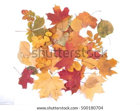 Fall Maple Leaf Tiled Wallpaper Autumn Icon Set Fall Leaves Berries Stock Vector 150285002