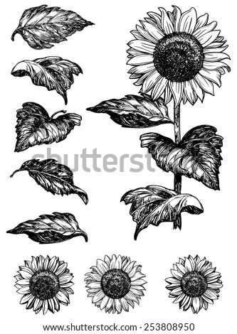 Sunflower Stock Photos, Royalty-Free Images & Vectors