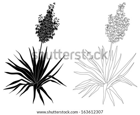 Yucca Plant Stock Images, Royalty-Free Images & Vectors