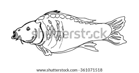 Fish Color Stock Images, Royalty-Free Images & Vectors