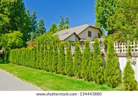 long green fence evergreen plants