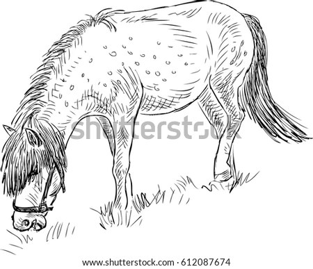 Sketches Cows Drawn By Hand Livestock Stock Vector