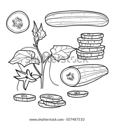 Food Drawn By Line On White Stock Vector 605329280