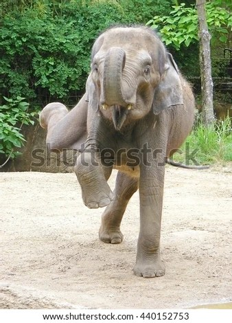 Dancing Elephant Stock Images Royalty Free Images