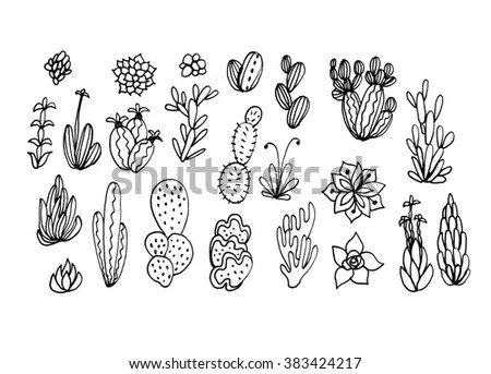 Dasylirion Stock Images, Royalty-Free Images & Vectors