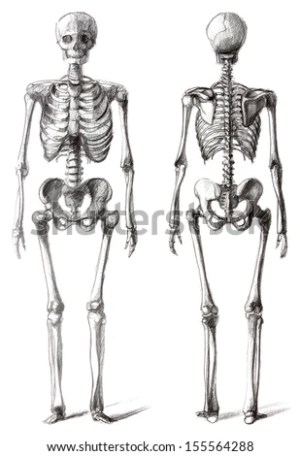 Anatomical Drawing Stock Photos, Images, & Pictures | Shutterstock