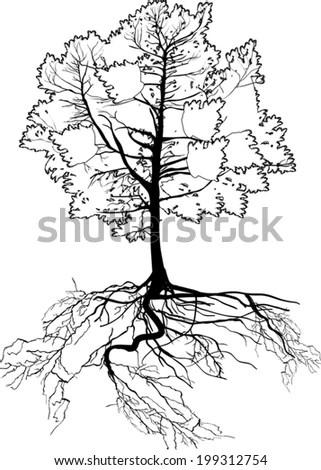 Editable Vector Illustration Leafless Oak Tree Stock