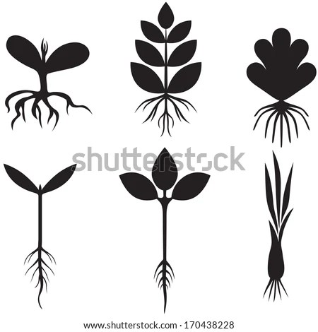 Plant Roots Stock Images, Royalty-Free Images & Vectors