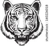 Bengal Tiger Anatomy Diagram, Bengal, Free Engine Image