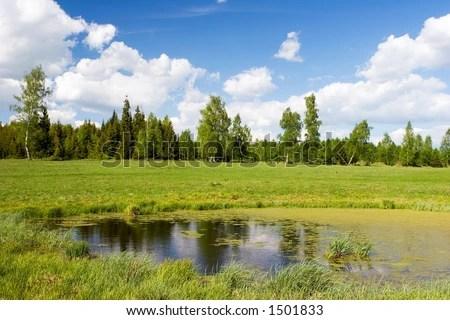 florida wetland natural landscape
