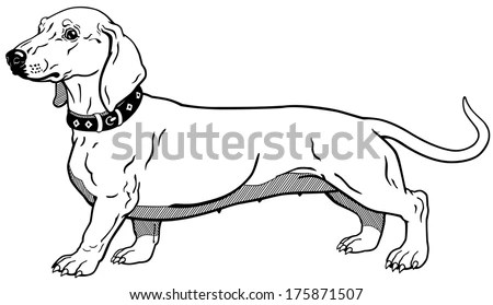 Dachshund Stock Photos, Dachshund Stock Photography