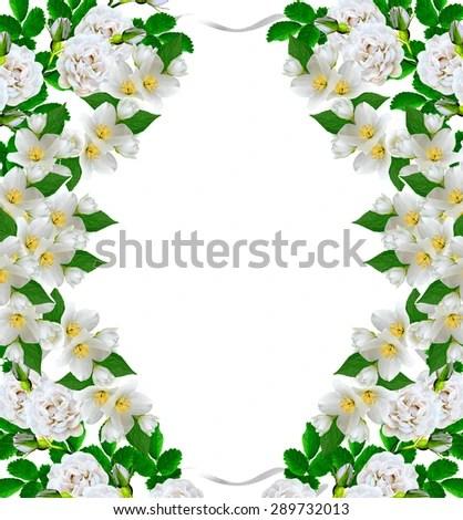 Branch Jasmine Flowers Isolated On White Stock Photo