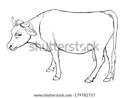 Coloring Book Pet Cow Calf Hand Stock Vector 586337810