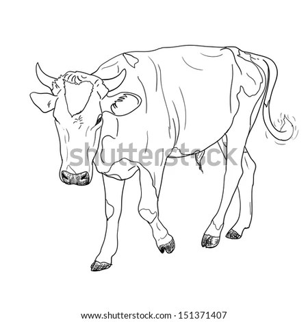 Black White Engrave Isolated Cow Stock Vector 363644570