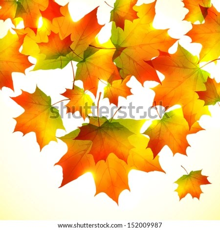 Fall Maple Leaf Tiled Wallpaper Autumn Seamless Background Fall Repeating Border Stock