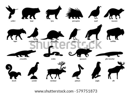 Animals North South America Stock Vector 682256404