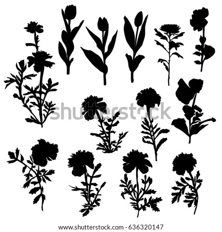 Vector Silhouette Flowers Black Color Isolated Stock