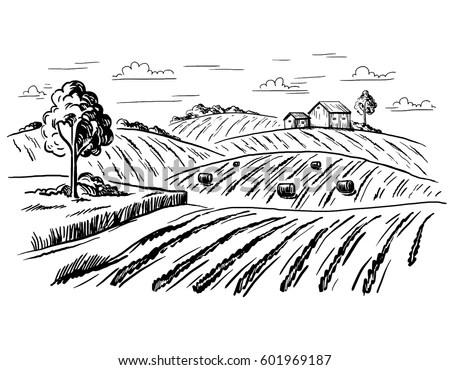 Vector Illustration Landscape Nature Agrarian Fields Stock