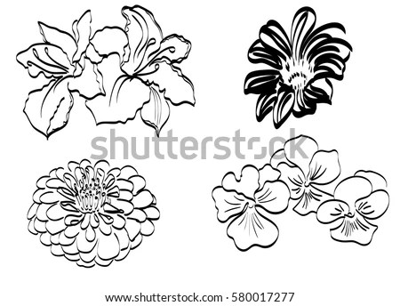 Vector Black Contour Pansy Flowers Isolated Stock Vector