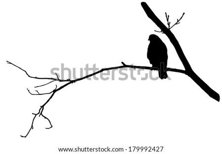 Vector Silhouette Bird Prey Osprey Flight Stock Vector