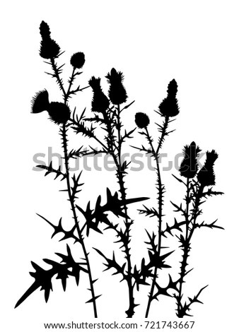 Set Stems Branches Plants Silhouette Wild Stock Vector