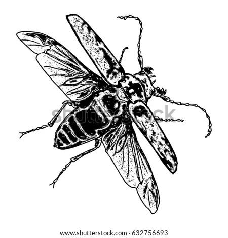 Vector Engraving Antique Illustration Honey Flying Stock