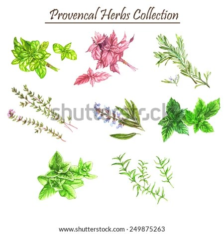 Collection Cooking Herbs Spices Isolated On Stock Photo