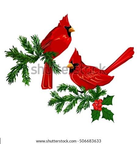 northern cardinal red