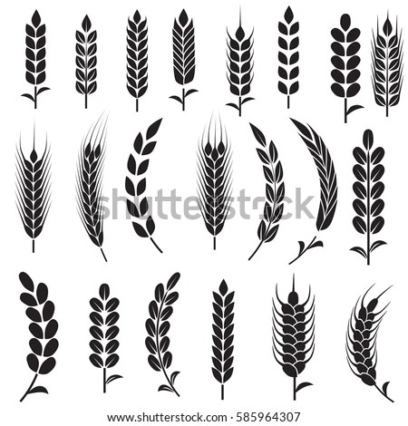 Wheat Ear Icon Set Leaves Icons Stock Vector 250800571