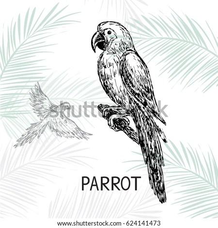 Raven Black Crow Sketches Silhouettes Vector Stock Vector