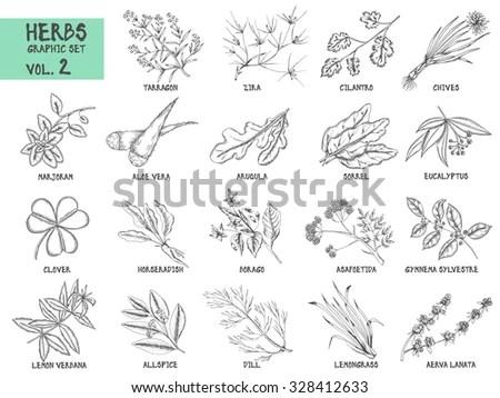 Outline Illustration Fresh Herbs Rosemary Sage Stock