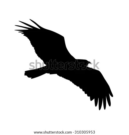 Vector Silhouette Bird Prey Osprey Flight Stock Vector