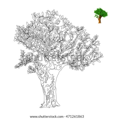 Olive Tree Vector Illustration Antistress Coloring Stock