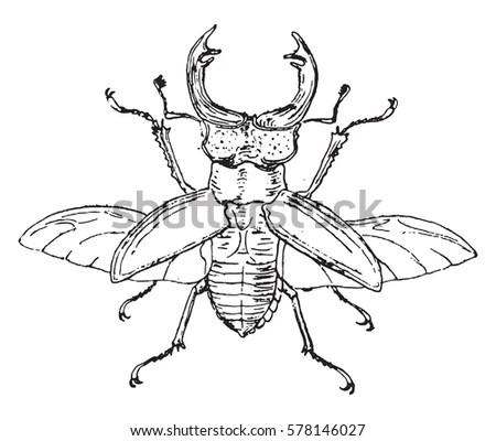 Blue Bottle Fly Bottlebee Musca Vomitoria Stock Vector