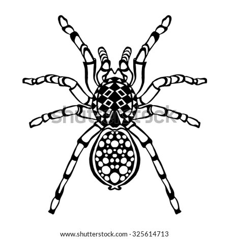 Spider Arachnid Species Most Dangerous Insects Stock