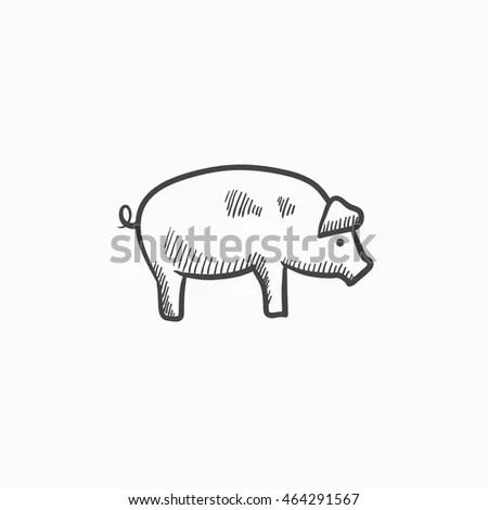 Hand Drawn Pig Sketch Vector Illustration Stock Vector