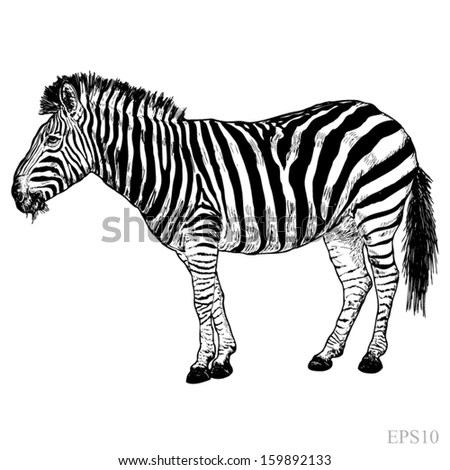 Vector Illustration Striped Pig On White Image Vectorielle