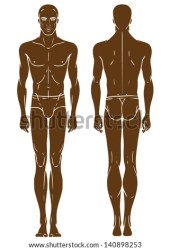 body front template standing african american length young human vector outline female shutterstock cartoon illustration system endocrine figure side anterior