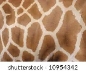 Giraffe Skin Texture Free Stock Photo - Public Domain Pictures