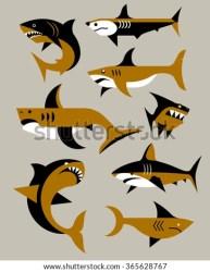 vector angry sharks whale shark shutterstock