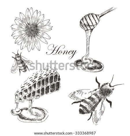 Honey bee sketch Stock Photos, Images, & Pictures