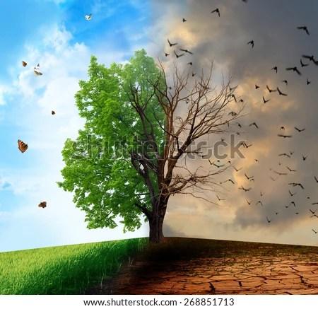 dead tree stock