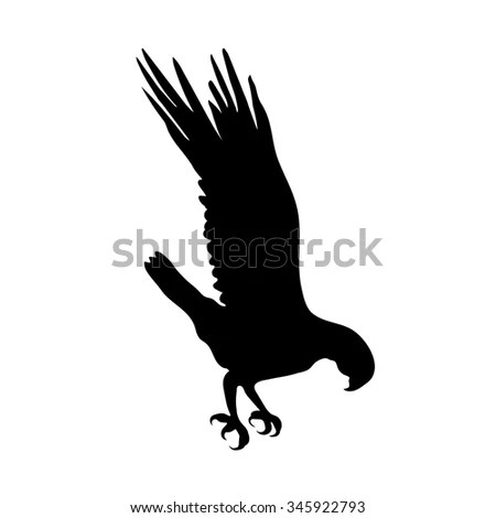 Osprey Stock Illustrations Cartoons Shutterstock