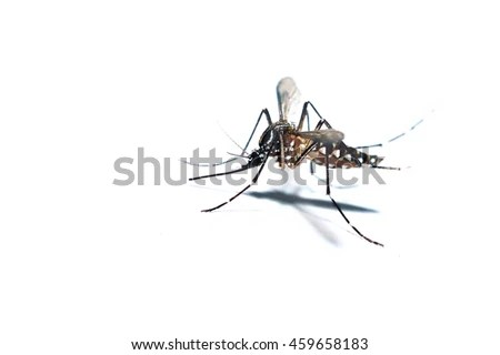 Animal Intercourse Stock Photos, Images, & Pictures