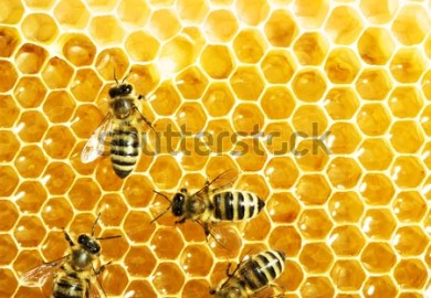 Bees Working On Honey Cells In Beehive Shutterstock