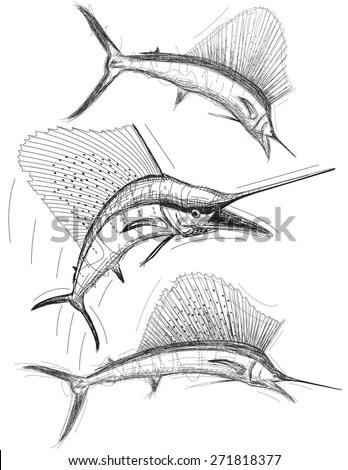 Sailfish Sketch